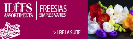 Freesia variés - Ernest TURC