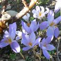 fleurs automnales Ernest TURC